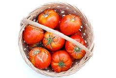 Stora ekologiska tomater i en korg Arkivfoton