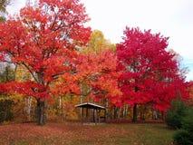 stora färgglada trees Royaltyfri Bild