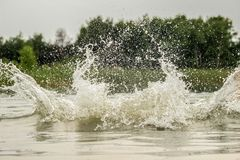 Stora färgstänk av vatten i sjön mot bakgrunden av skogen fotografering för bildbyråer