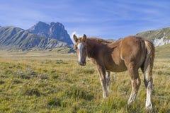 Stora föl och Corno royaltyfri fotografi