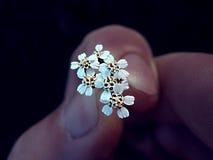 Stora för förälskelse blommor lite Royaltyfri Foto