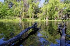 Stora filialer och en blured skogreflexion på sjön Arkivbild