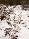 stora fotspår till och med snögolvyttersida övervintrar den december banan arkivfoto