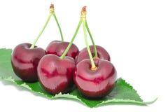 Stora frukter för söta saftiga körsbärsröda smakliga mogna bär Arkivfoto