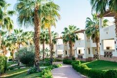 Stora gröna palmträd på lokalen av hotellet fotografering för bildbyråer
