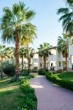 Stora gröna palmträd på lokalen av hotellet royaltyfria foton