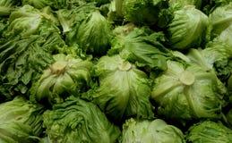 stora grönsaker för kålgreenhuvud arkivbild