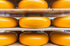 Stora gula rundor av closeupen för goudaost på hyllor som är klara för royaltyfri foto