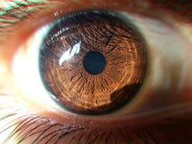 Stora härliga ögon Royaltyfri Bild