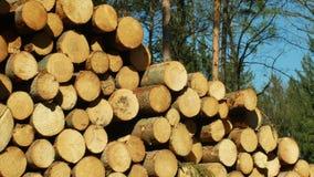 Stora h?gar av klippta tr?dstammar, runda journaler Prydliga skogar hemsökte och anföll vid den europeiska prydliga plågan för sk lager videofilmer