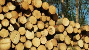 Stora h?gar f?r tr? av klippta tr?dstammar, runda journaler Prydliga skogar hems?kte och anf?ll vid den europeiska prydliga sk?ll lager videofilmer