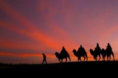 Stora himmel- och husvagnhandelsresande som rider kamel Arkivfoton