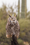 Stora Horned Owl Head On Royaltyfri Foto