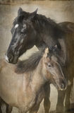 stora hästar lilla två Royaltyfri Bild