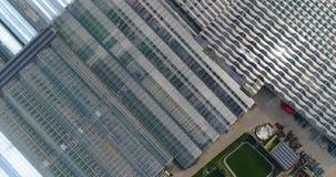 Stora industriella v?xthus Flyga över ett stort växthus med blommor, en växthussikt från ovannämnda växande blommor lager videofilmer