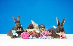 Stora kaniner med pilbågar och små kaniner i en korg nära blommorna och påskäggen Royaltyfria Bilder