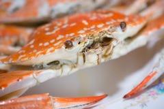 stora krabbor som är förberedda på trätabellen Arkivbild