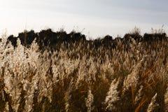 Stora lösa växter i öknen Arkivfoto