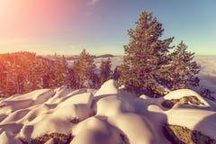 stora liggandebergberg alps räknade trän för vintern för schweizare för snow för husplatsen lilla Fantastiskt glödande solljus Arkivfoto