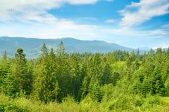 stora liggandebergberg Carpathians på ljus solig dag royaltyfria foton