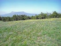 stora liggandebergberg Grön äng med gula blommor och skogbergskedjor i en blå ogenomskinlighet 2008 crimean berg sörjer sommar royaltyfria foton