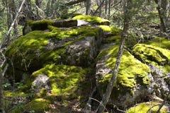 stora magiska mossy rocks för skog Royaltyfri Bild
