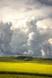 Stora moln över sätter in av canola Royaltyfri Fotografi