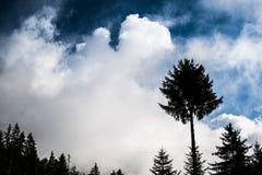 Stora moln ovanför skogen Royaltyfria Bilder