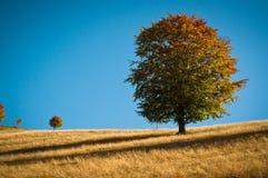 Stora och lilla trees Arkivbild