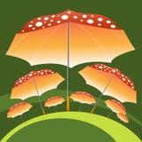 Stora och små paraplyer som är liknande till flugsvamp Royaltyfri Bild