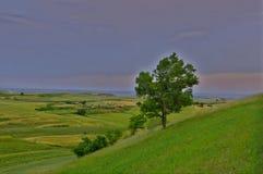 Stora områden av det vetefält och trädet Royaltyfri Bild