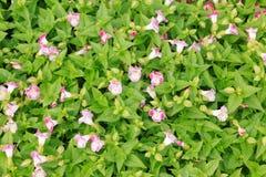 Stora områden av wild blommor Arkivbild