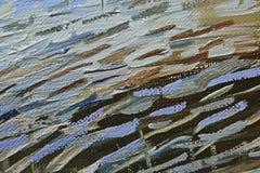 Stora penseldrag av blå olje- målarfärg på kanfas möjliga projekt för konstbakgrundsinternet som ska användas Royaltyfri Bild