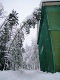 Stora prydliga träd som täckas med snö Arkivfoto