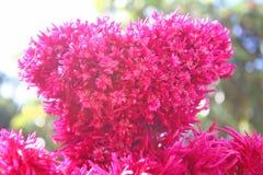 Stora röda blommande Hornbills blommar royaltyfri foto