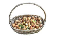 Stora röda och guld- lökgrönsaker för kulinariskt i korg royaltyfri foto