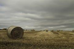 Stora runda baler av sugrör arkivbilder