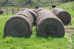 Stora runda baler av sugrör Fotografering för Bildbyråer