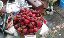 Stora saftiga jordgubbar Royaltyfri Foto