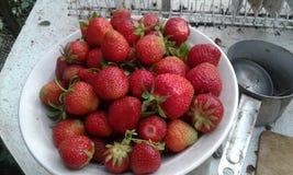 Stora saftiga jordgubbar Arkivfoton