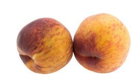 Stora saftiga persikor Arkivbild