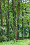 stora skogtrees Arkivbild