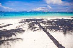 Stora skuggapalmträd på den vita sanden sätter på land Royaltyfria Bilder