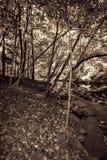 Stora Smokey Mountain Park Forest i Sepiasignaler Arkivfoto