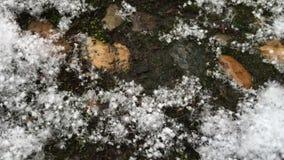 Stora snöflingor faller på spåret i trädgården stock video