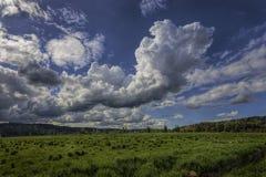 Stora stackmolnmoln i en ljus blå himmel över en frodig gräsplan betar  arkivfoto