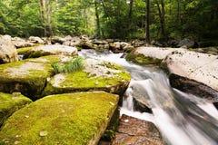 Stora stenar i floden som täckas med mossa i lös skog Arkivbild