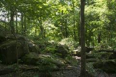 Stora stenblock i sommarskog fotografering för bildbyråer