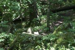 Stora stenblock i sommarskog royaltyfri fotografi