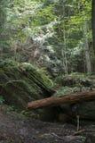 Stora stenblock med det stupade trädet royaltyfri foto